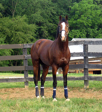 Union Rags bright and alert