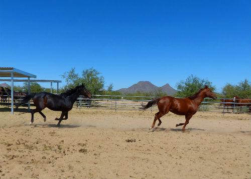 horses at equine encore foundation in Tucson, Arizona