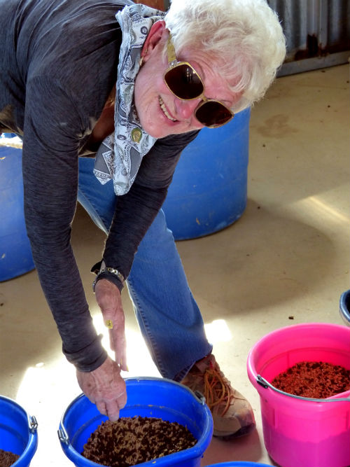 Patti Shirley mixes grain for her herd at Equine Encore