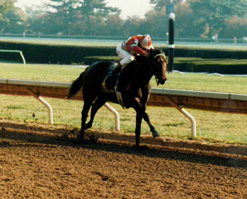 With Dirt Keeneland Reaching For The Breeders Cup Stars