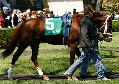 Dean's Kitten in the paddock at Keeneland, April 9, 2009.