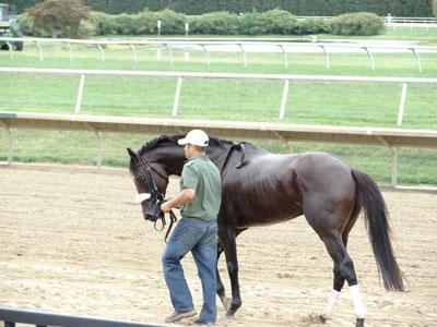 Nicanor Racehorse
