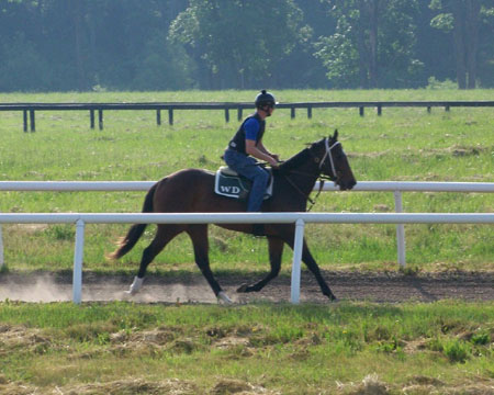 The Ideal 2 Year Old Training Program Thoroughbred